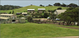 Ace Hi Riding Ranch - Accommodation Nelson Bay
