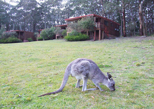 Jenolan Caves Cottages - Accommodation Nelson Bay