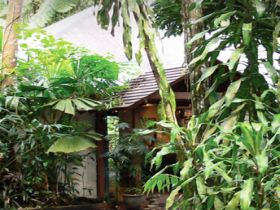 Heritage Lodge and Spa - In the Daintree - Accommodation Nelson Bay