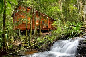 The Mouses House - Rainforest Retreat - Accommodation Nelson Bay