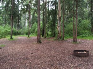 Murphys Glen campground - Accommodation Nelson Bay
