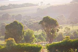 Mackas Farm - Accommodation Nelson Bay