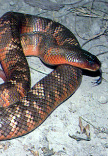 Armadale Reptile  Wildlife Centre - Accommodation Nelson Bay