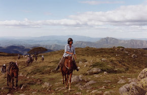 High Country Horses - Accommodation Nelson Bay