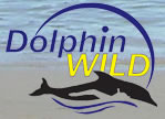 Dolphin Wild - Accommodation Nelson Bay