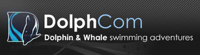 Dolphcom - Dolphin  Whale Swimming Adventures - Accommodation Nelson Bay