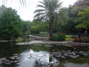 Brisbane City Botanic Gardens - Accommodation Nelson Bay