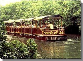 Daintree Rainforest River Trains - Accommodation Nelson Bay