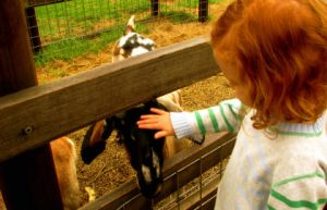 Collingwood Children's Farm - Accommodation Nelson Bay