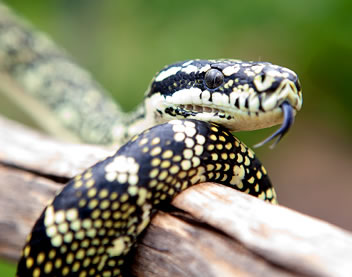 Reptile Encounters - Accommodation Nelson Bay