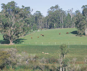 Scenic Drives - Bunbury Collie Donnybrook - Accommodation Nelson Bay