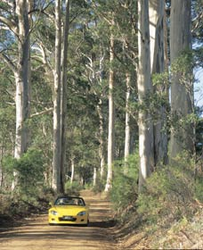 Mount Shadforth Scenic Drive - Accommodation Nelson Bay
