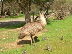 Minlaton Fauna Park - Accommodation Nelson Bay