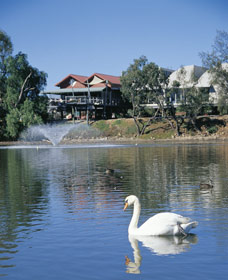 White Swans - Accommodation Nelson Bay