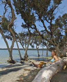 Stokes National Park - Accommodation Nelson Bay