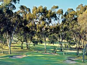 Tanunda Pines Golf Club - Accommodation Nelson Bay