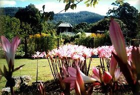Blueberry Cottage Open Gardens - Accommodation Nelson Bay
