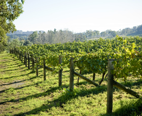 Surveyor's Hill Vineyards - Accommodation Nelson Bay