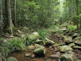 Amamoor State Forest - Accommodation Nelson Bay