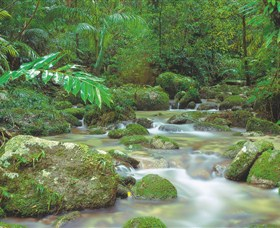 Mossman Gorge Daintree National Park - Accommodation Nelson Bay