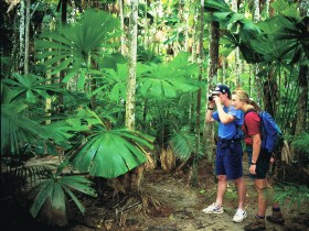 Mount Sorrow Ridge Trail Daintree National Park - Accommodation Nelson Bay