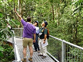 Daintree Discovery Centre - Accommodation Nelson Bay