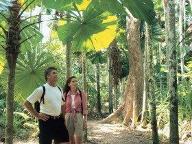 Licuala State Forest - Accommodation Nelson Bay