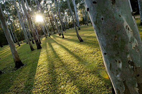 Tondoon Botanic Gardens - Accommodation Nelson Bay