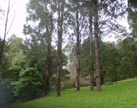 Mount Dandenong Arboretum - Accommodation Nelson Bay