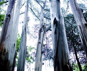 Dandenong Ranges National Park - Accommodation Nelson Bay