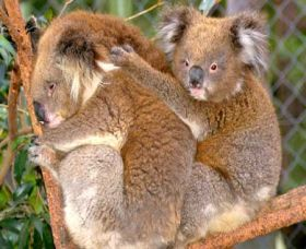 Shoalhaven Zoo - Accommodation Nelson Bay