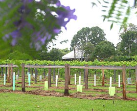 Douglas Vale Historic Homestead  Vineyard - Accommodation Nelson Bay
