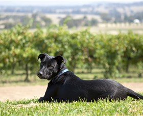 Moothi Estate Vineyard and Cellar Door - Accommodation Nelson Bay