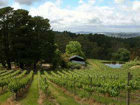 Arranmore Wines - Accommodation Nelson Bay