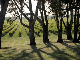 Henry's Drive Vignerons - Accommodation Nelson Bay