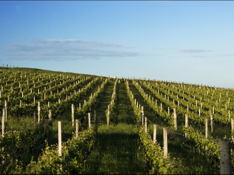 Delamere Vineyard - Accommodation Nelson Bay