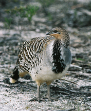 Yongergnow Australian Malleefowl Centre - Accommodation Nelson Bay
