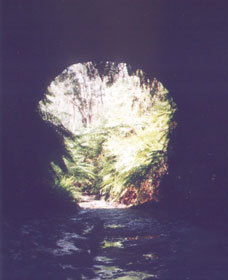 Glow Worm Tunnel - Accommodation Nelson Bay