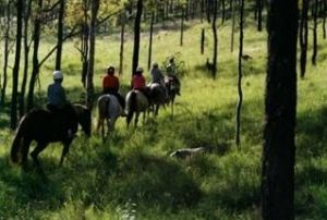 Hunter Valley Horse Riding and Adventures - Accommodation Nelson Bay