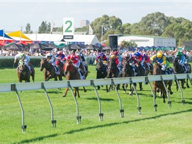 Morphettville Racecourse - Accommodation Nelson Bay