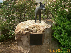 Dingo Statue - Accommodation Nelson Bay