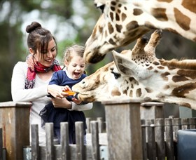 Taronga Western Plains Zoo Dubbo - Accommodation Nelson Bay