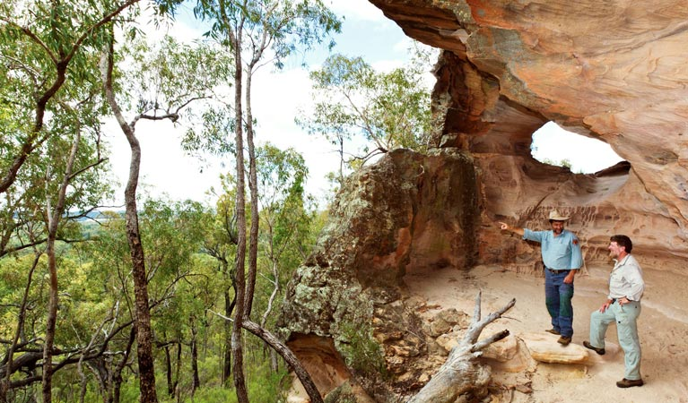 Pilliga National Park - Accommodation Nelson Bay
