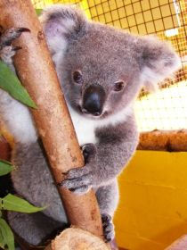 Cooberrie Park Wildlife Sanctuary - Accommodation Nelson Bay