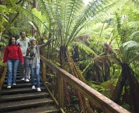 Otway Fly Treetop Adventures - Accommodation Nelson Bay
