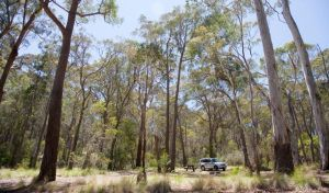 Coolah Tops National Park - Accommodation Nelson Bay