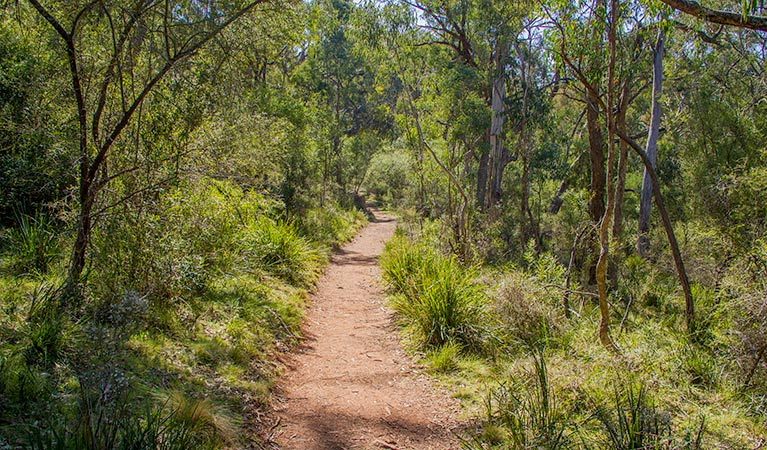 Mares Forest Creek walking track - Accommodation Nelson Bay