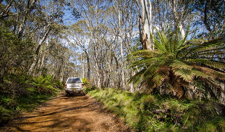 Barrington trail - Accommodation Nelson Bay