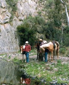 Yarramba Horse Riding - Accommodation Nelson Bay