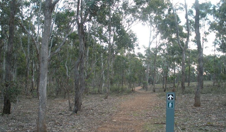 Green track - Accommodation Nelson Bay